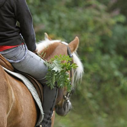 Horse riding in Marlengo and environs