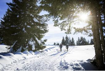 Winter Activities in South Tyrol