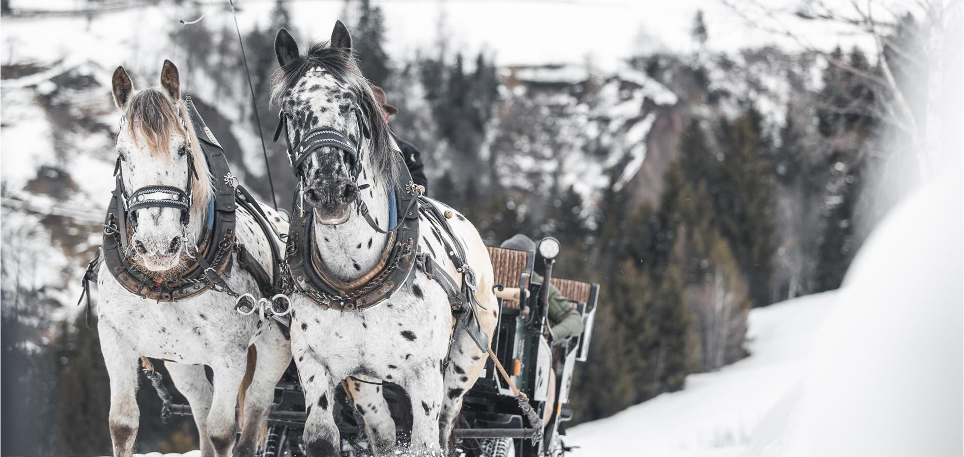 winter horse riding sleigh rides in avelengo and merano 2000