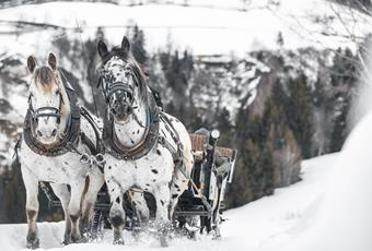 Carriage & sleigh rides