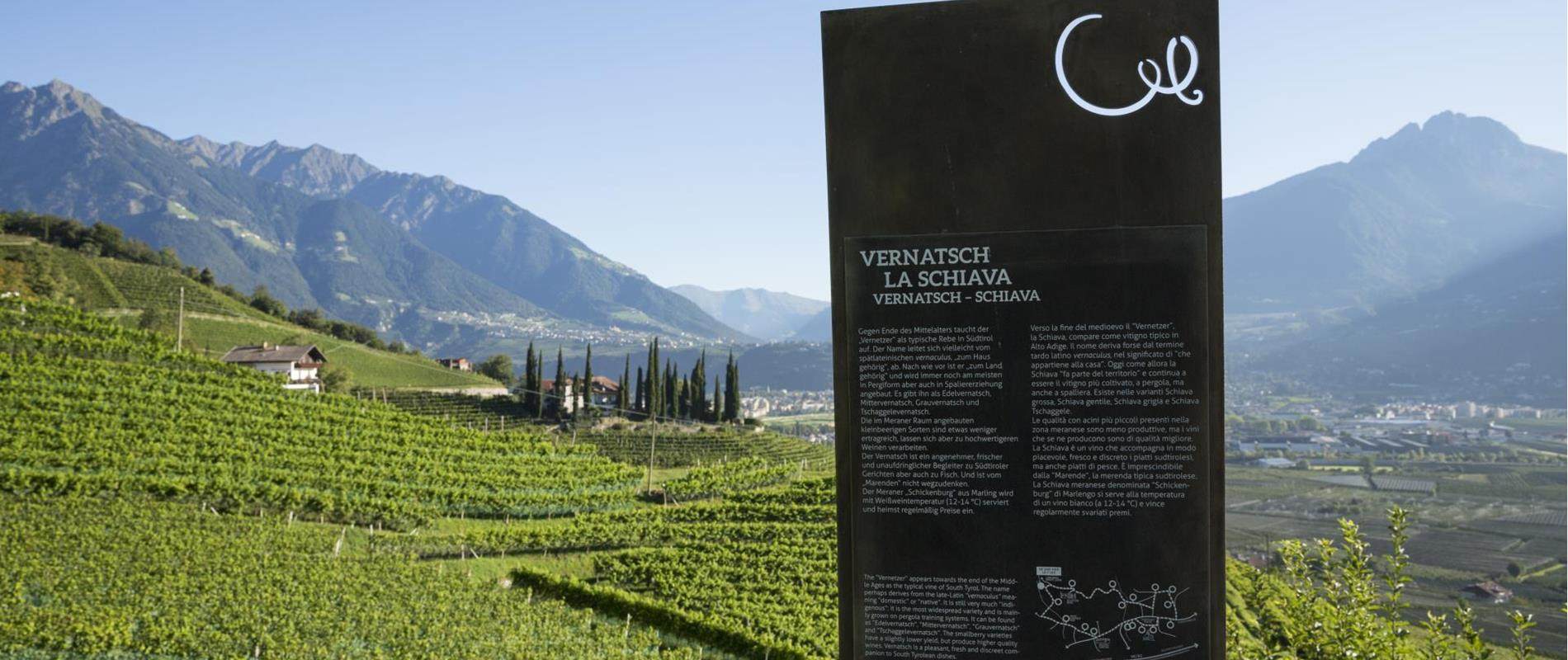 The WineCulturePath offers an panoramic view