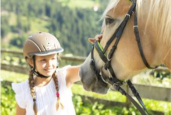 Riding with Haflinger horses