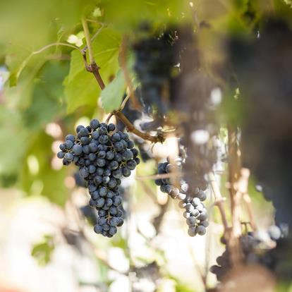 Growing Regions and Grape Varieties