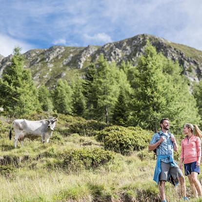 Guided hikes in Scena