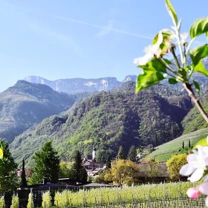 Alpine-Mediterranean village with orchards, vinyards and roses a Nalles