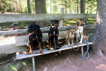 Holidays with dogs in South Tyrol