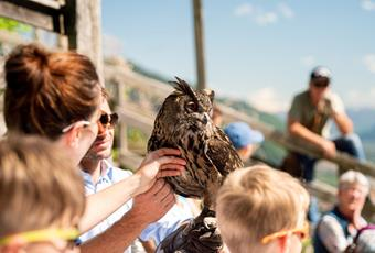 Bird Rescue Center and Birds of Prey Demonstrations