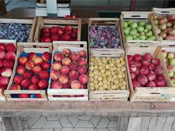 Fruit stand on the Alto Adige wine road