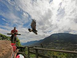 Bird Care Centre Tyrol Castle