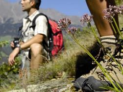 Guided hiking tour - Proveis - Stierbergalm - Mandelspitz